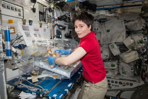 ISS-43_Samantha_Cristoforetti_with_the_Osteo-4_experiment