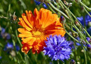fiore-x-grazia